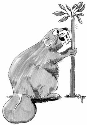Karikatur, Cartoon: Biber, © Roger Schmidt